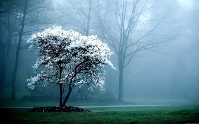 svet priroda rastenia vetvi kapli cvet dozd 700x437 Красивое дерево   Beautiful tree