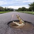 Крокодил на дороге - Crocodile on the road