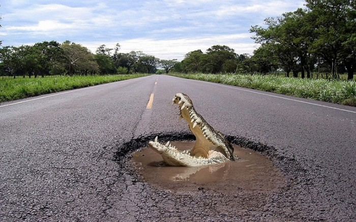 a52b63fa1f2b839 700x437 Крокодил на дороге   Crocodile on the road