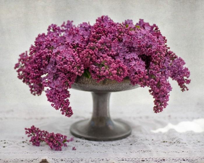 buket vaza grozda siren 700x559 Сирень   Lilac