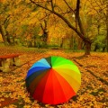 Зонтик в парке - Umbrella in the park