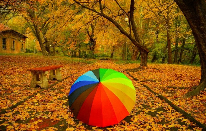 dereva park dorozka listva osen skama zontik listopad trees autumn park 700x446 Зонтик в парке   Umbrella in the park