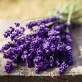 Лаванда - Lavender