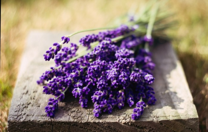 makro cvety cvetochki lavanda 700x445 Лаванда   Lavender