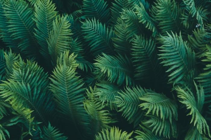 makro priroda paporotnik vetki listia zelenyi fon 700x466 Зеленые листья   Green leaves
