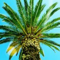 Пальма - Palm