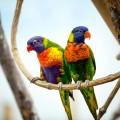 Попугаи - Parrots