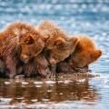 Маленькие мишки - Small bears