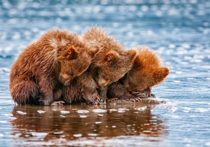 tri malenkih medvedya 700x490 Маленькие мишки   Small bears