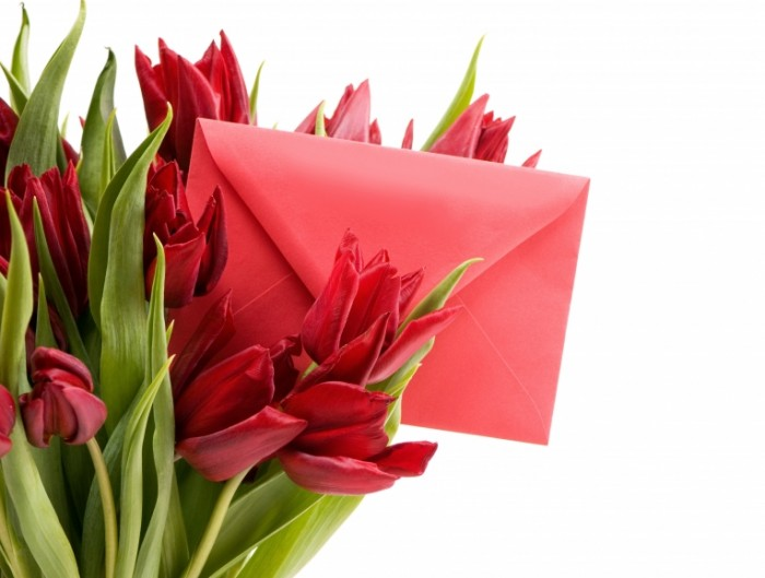 tulips letter spring red 700x529 Тюльпаны с письмом   Tulips with letter