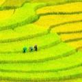 Азия плантации - Asia plantations