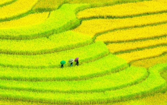 Aziya plantatsii Asia plantations 4088x2584 700x441 Азия плантации   Asia plantations