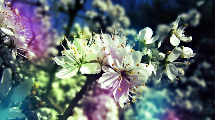 Derevo vesna Tree spring 700x393 Дерево весна   Tree spring
