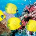 Кораллы - Corals