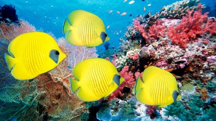 Korallyi Corals 5400    3038 700x393 Кораллы   Corals