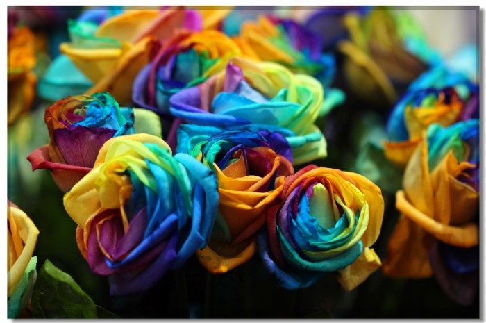 Rozyi Roses 5335    3556 700x465 Розы   Roses