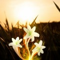 Цветок - blossom