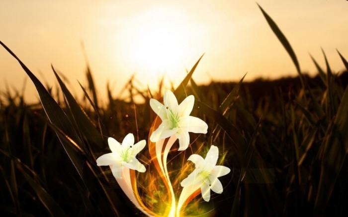 TSvetok blossom 3840    2400 700x437 Цветок   blossom