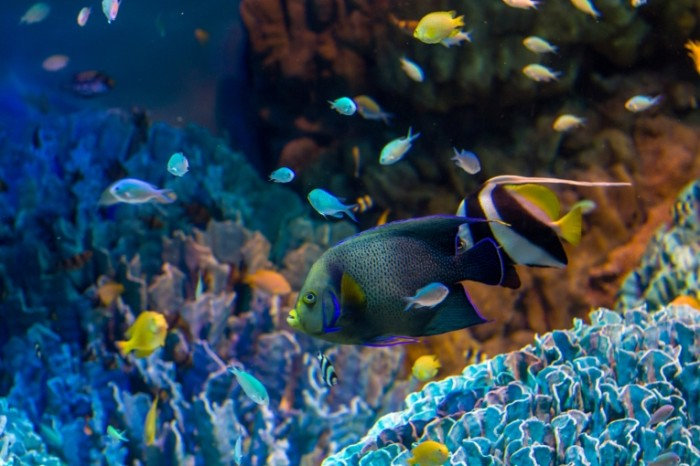 akvarium ryby korally 700x466 Рыба   Fish
