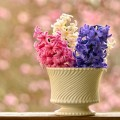 Цветы в вазе - Flowers in the vase