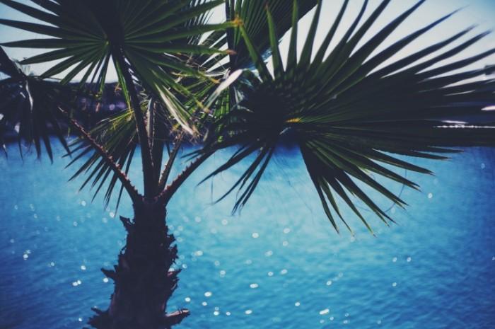palma listya leto voda 700x465 Пальма   Palm