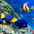 Риф - reef