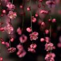 соцветие - inflorescence