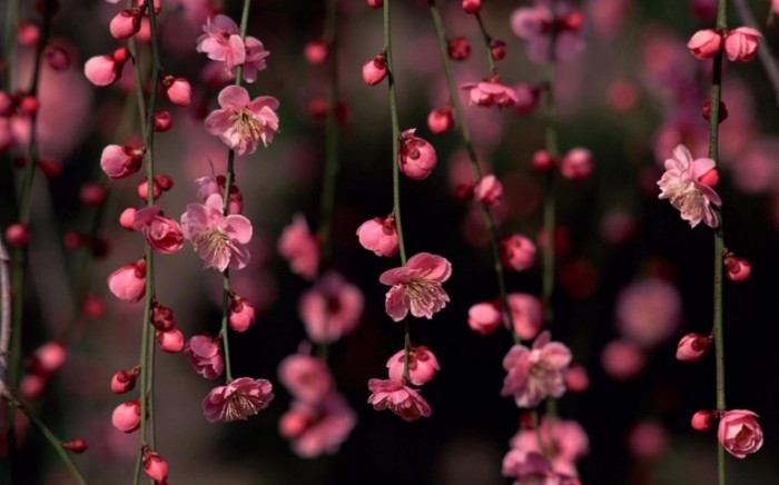 sotsvetie inflorescence 3840    2160 700x436 соцветие   inflorescence