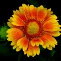 Красивый цветок - Beautiful flower