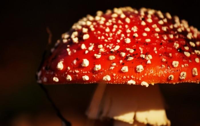 griby priroda fon 719 700x441 Гриб   Mushroom