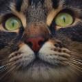 Кошачий глаз - Cat`s eye