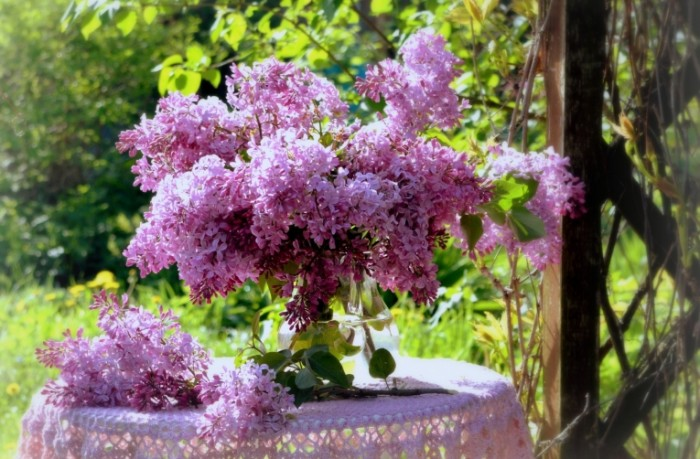siren buket vesna 700x459 Сирень   Lilac