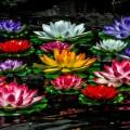 Водяные лилии - Water lilies