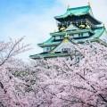Сакура - Sakura
