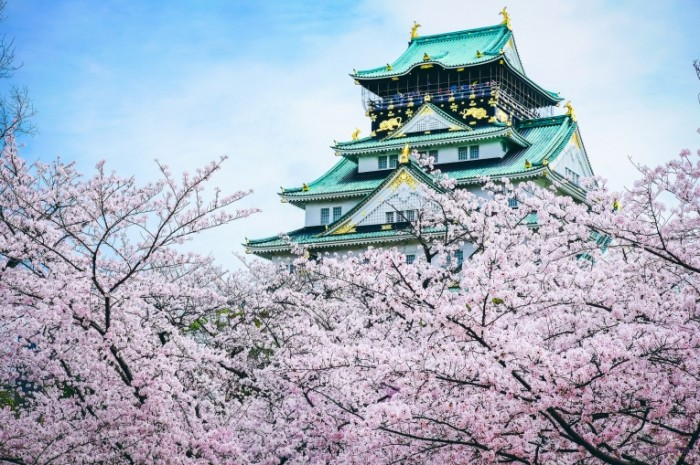 yaponiya zamok pagoda sakura 700x465 Сакура   Sakura