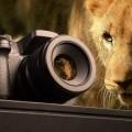 Камера и животное - Camera and animal