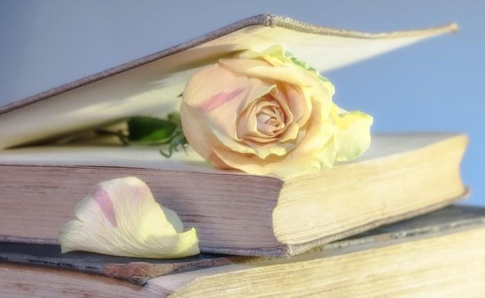 Kniga Book 700x431 Книга и роза   Book and rose