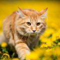 Кот цветы - Cat flowers