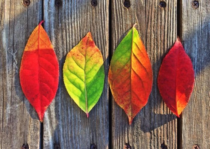 Listya Leaves 700x497 Листья   Leaves