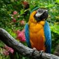 Попугай природа - Parrot nature