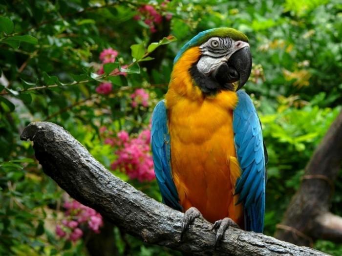 animals parrots branches 1920x 2560x1920 animalhi.com  700x524 Попугай природа   Parrot nature