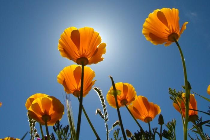 cvety stebli butony nebo 700x466 Цветы   Flowers