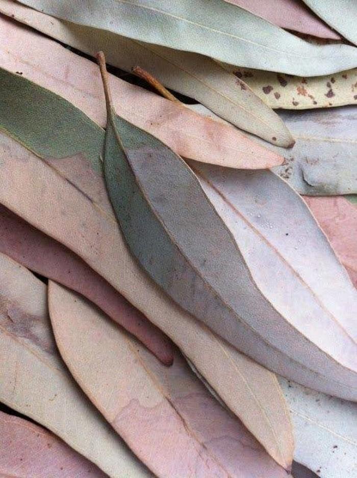 eyeem 96713825 700x937 Листья   Leaves