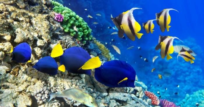 4096x2160 75011 fish under water 4k ultra hd wallpaper  nature 700x368 Кораллы и море