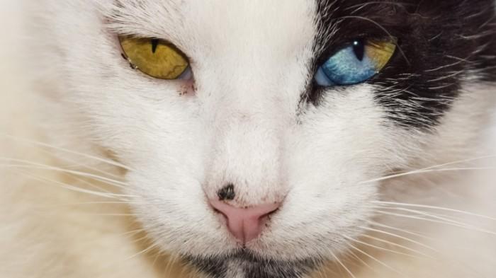 Kot Cat 700x393 Кот   Cat