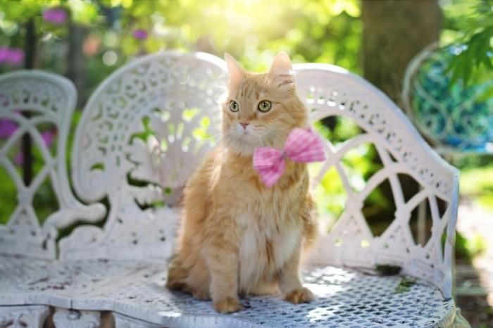 Kot Cat2 700x466 Кот   Cat