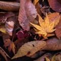 Листья - Leaves