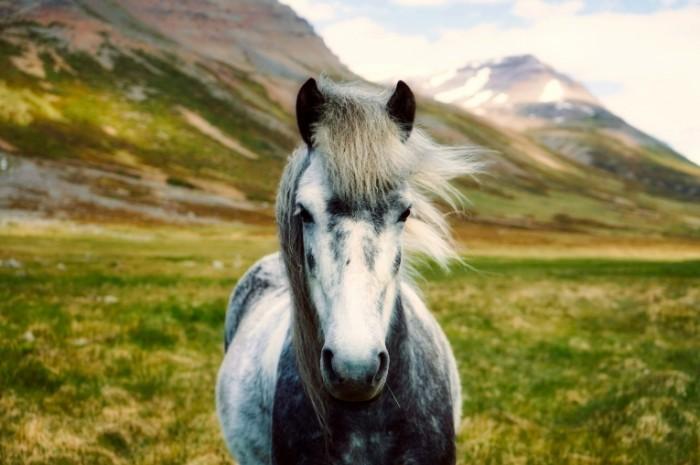 Loshad Horse 700x465 Лошадь   Horse