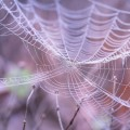 Паутина - Web