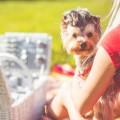 Пикник на природе с собакой - Picnic in the nature with a dog